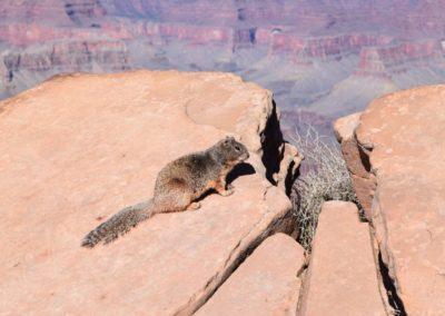 Squirrel-Besuch